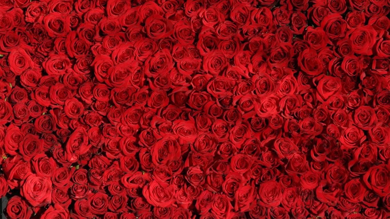 rose-fuga-romantica
